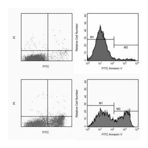 FITC Annexin V Apoptosis Detection Kit I RUO