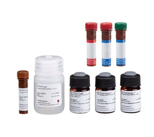 Anti-Human FoxP3 Staining Kit - Alexa Fluor 647, FoxP3, CD4, CD25 RUO
